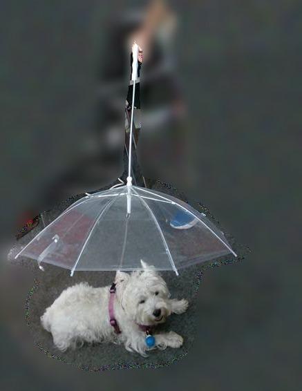umbrela pvc westie